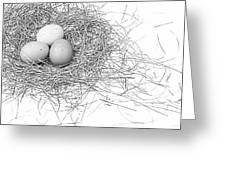 Three Eggs In A Nest Black And White Greeting Card