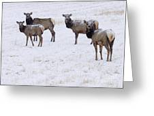 Three Elk Cows And Calf Greeting Card
