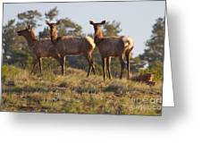Three Elk Greeting Card