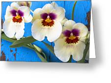 Three Exotic Orchids Greeting Card