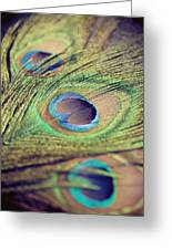 Three Feathers Greeting Card