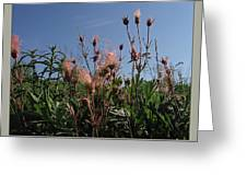 three flowered avens - Geum triflorum - 12MA30-1 Greeting Card