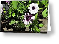 Three Flowers Greeting Card by Claudette Bujold-Poirier