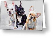 Three Frenchie Puppies Greeting Card by Jane Schnetlage
