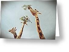 Three Giraffes Greeting Card