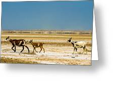 Three Goats In A Desert Greeting Card