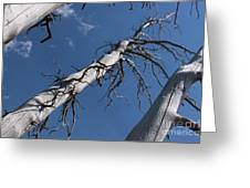 Three Gray Trees Greeting Card