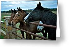 Three Horses Waiting For Carrots Greeting Card