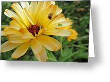 Three Insects And A Flower Greeting Card
