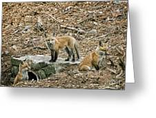 Three Kits Greeting Card