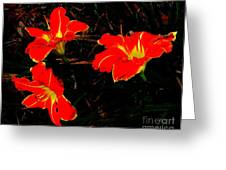 Three Lilies Greeting Card
