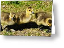 Three Little Goslings Greeting Card