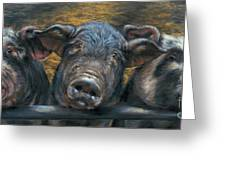 Three Little Piglets Greeting Card