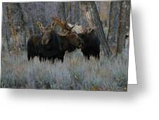 Three Moose In The Woods Greeting Card