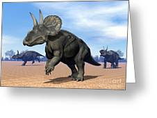 Three Nedoceratops In The Desert Greeting Card