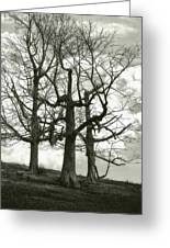 Three On A Hill Greeting Card