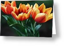 Three Orange And Red Tulips Greeting Card