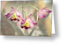 Three Orchid Beauties Greeting Card