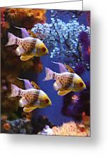 Three Pajama Cardinal Fish Greeting Card