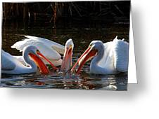 Three Pelicans And A Fish Greeting Card