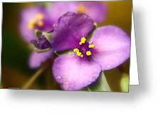 Three Petals Of Purple Greeting Card by Alexandra  Rampolla
