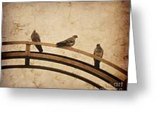 Three Pigeons Perched On A Metallic Arch. Greeting Card