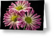 Three Pink Flowers Greeting Card