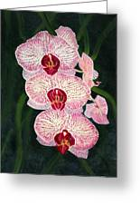 Three Pink Orchids Greeting Card