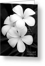 Three Plumeria Flowers In Black And White Greeting Card by Sabrina L Ryan