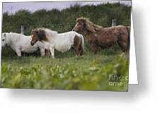 Three Ponies Greeting Card