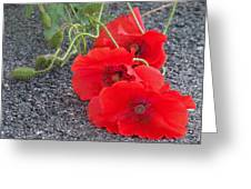Three Poppies Too Greeting Card