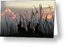 Three Rabbits In The Setting Sun Greeting Card