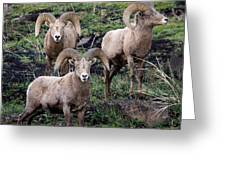 Three Rams Greeting Card