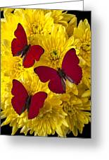 Three Red Butterflys Greeting Card by Garry Gay