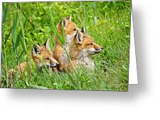 Three Red Fox Pups Greeting Card