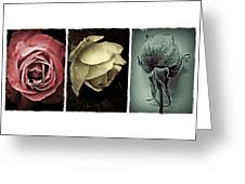 Three Roses Greeting Card