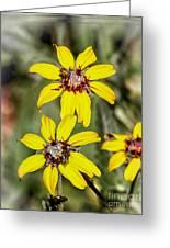 Three Sister Wildflowers Greeting Card