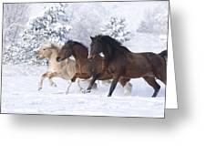 Three Snow Horses Greeting Card