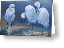 Three Snowy Egrets Greeting Card