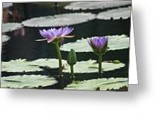 Three Stages Of Blue Bloom Greeting Card