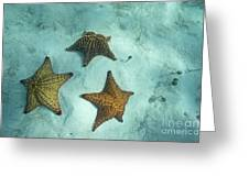 Three Starfishes On Sandy Seabed Greeting Card