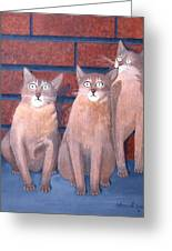 Three Tan Cats Greeting Card