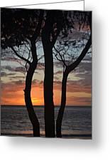 Three Trees At Sunset  Greeting Card