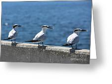 Three Turning Terns Greeting Card