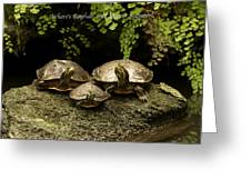 Three Turtles Greeting Card