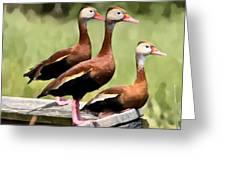Three Whistling Ducks Greeting Card