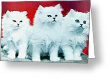 Three White Cats Greeting Card