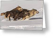 Three Wolves Greeting Card