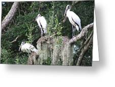 Three Wood Storks Greeting Card