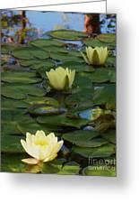 Three  Yellow Lilies Greeting Card
